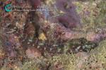 20100101-kasurihebiginpo1.jpg